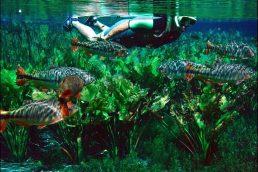 Mergulho no Brasil: Bonito