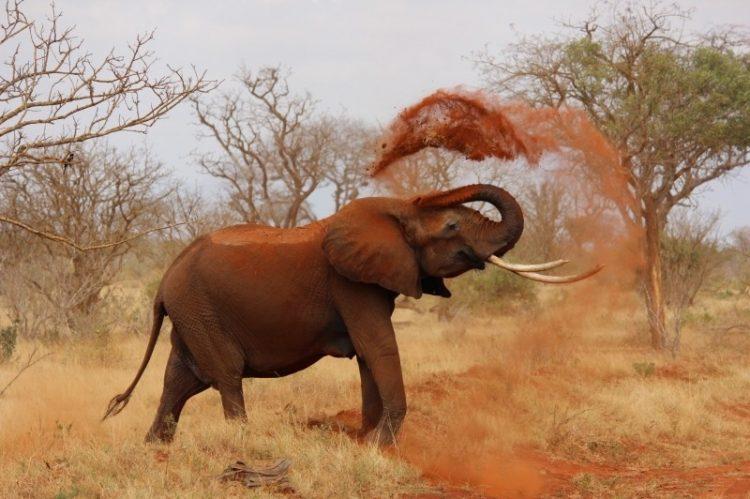 Com 22 mil quilômetros quadrados, os parques nacionais de Tsavo (Tsavo East National Park and Tsavo West National Park) fazem com que o complexo seja o maior do Quênia