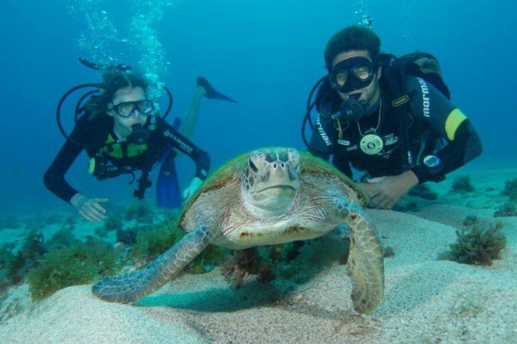 Mergulho de batismo com tartaruga em Fernando de Noronha