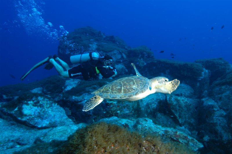 Mergulho de batismo com tartaruga em Fernando de Noronha, em Pernambuco