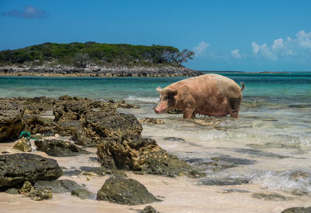 Cinco praias inusitadas para fugir do óbvio