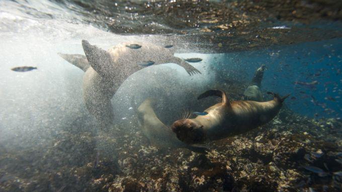 Focas em Galápagos