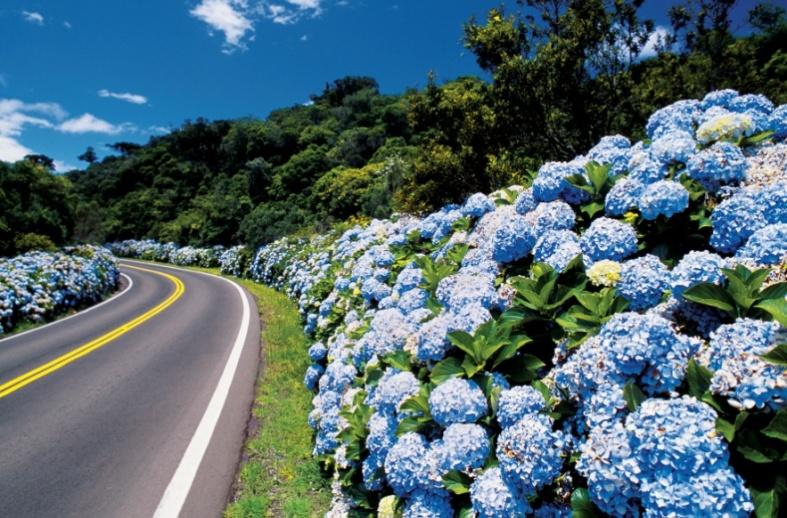 Flores para visualizar durante a viagem   Divulgação