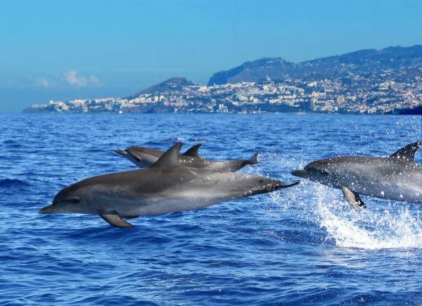 Passeio de barco com golfinhos | Divulgação