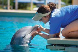 Público poderá conhecer os bastidores do SeaWorld Orlando durante o mês de maio