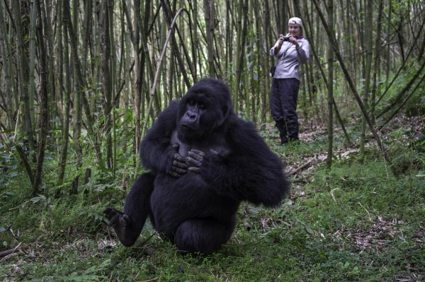 Tour pelo Parque Nacional dos Vulcões, em Ruanda | Divulgação