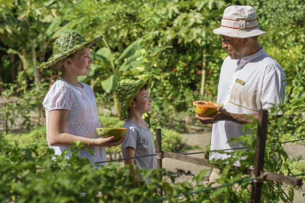 Crianças em atividade de coleta de frutas | Divulgação
