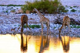 Etosha National Park, Namíbia | naddel@weltfrauschaft on Visual Hunt / CC BY-NC-ND