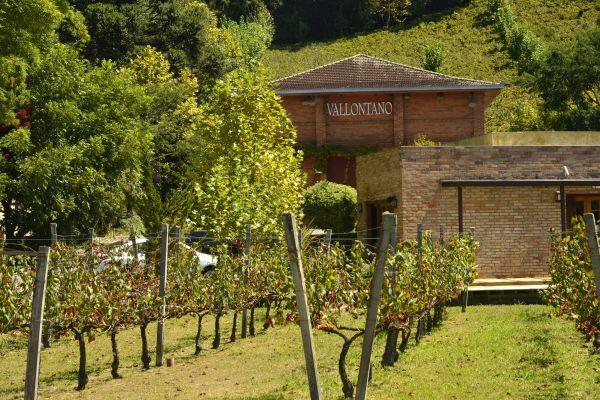 Vinícolas no Rio Grande do Sul | Divulgação