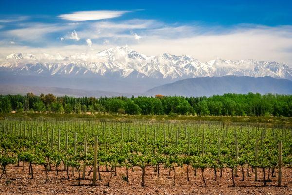 Mescla das montanhas com as plantações de uva   Divulgação