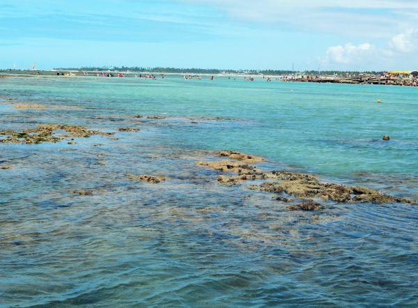 Piscinas naturais em Pernambuco | Divulgação
