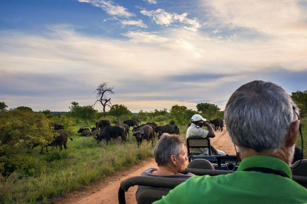 Kruger National, na África do Sul, é um dos parques nacionais que valem a visita