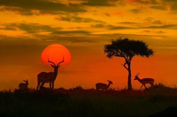 Safári na África é opção para viajantes | Divulgação