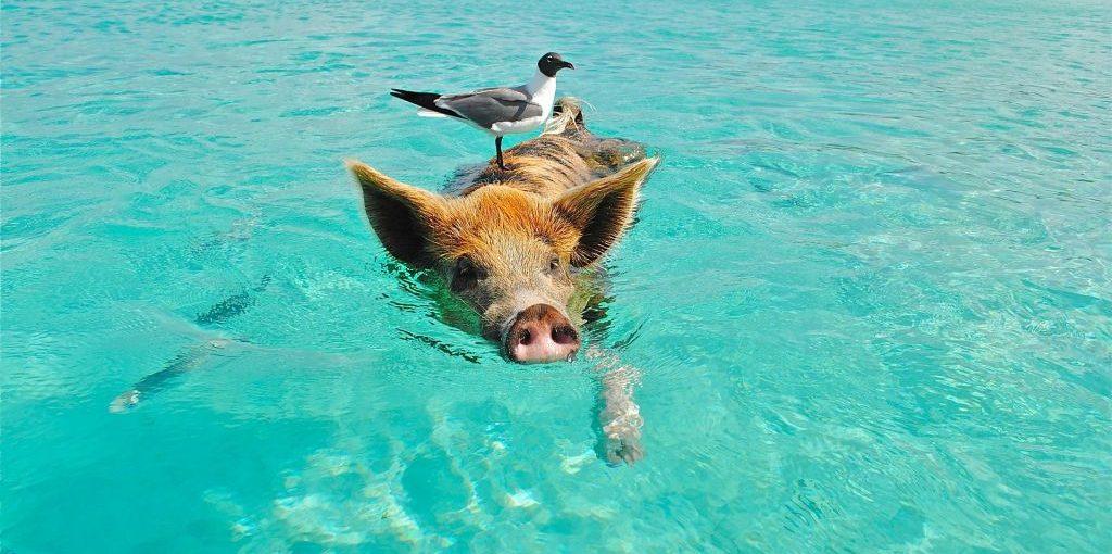 Big Major Cay, Bahamas   Pixabay