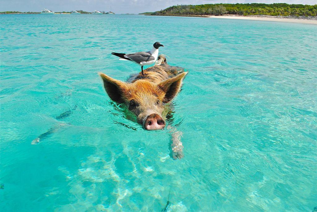 Os melhores lugares do mundo para ver animais na natureza